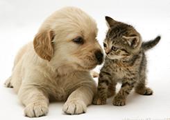 pup_cat